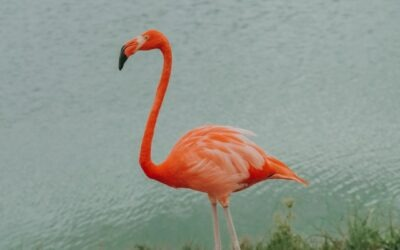 Bullet journals & een fluffy flamingo pen